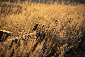 Fence through dry grass