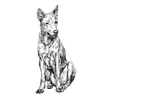 Thai dog_drawing and shade