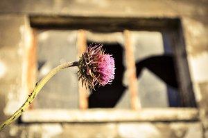 Weed & Window