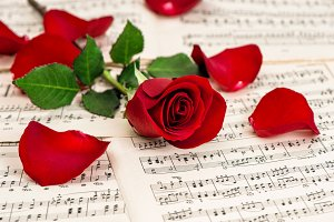 Red rose flower. Music notes