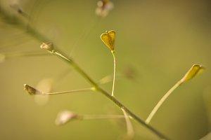 Heart-shaped tendrils