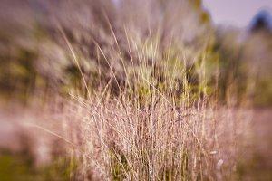 Dry weeds