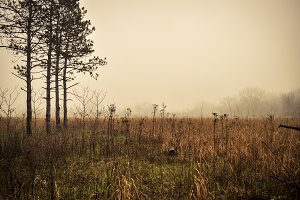 Meadow Fog