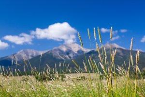 Grasses frame Mount Princeton