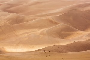 People on sand dunes at park