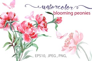 Watercolor peonies. (Floral set.)