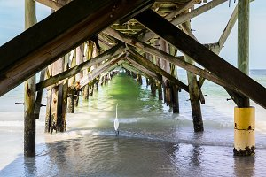 Great egret walks under pier