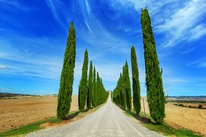 Cypress trees road in Tuscany.