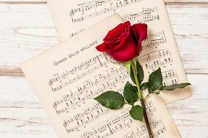 Red rose. Music notes