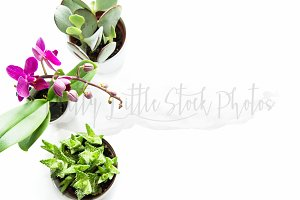 #266 PLSP Styled Desktop Stock Photo