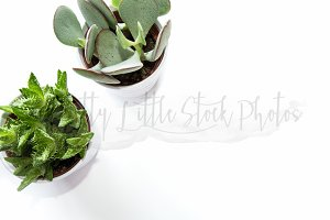 #288 PLSP Styled Desktop Stock Photo