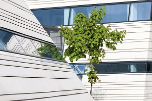 Maple tree and modern architecture