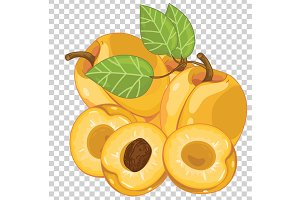 Apricot isolated, Vector.