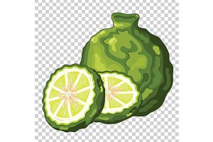 Bergamot Isolated, Vector.