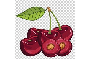 Cherry Isolated, Vector.