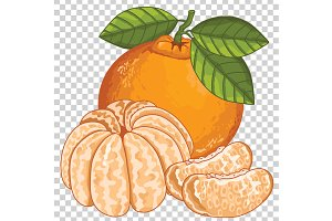 Mandarin Isolated, Vector.