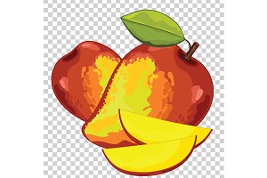 Mango Isolated, Vector.