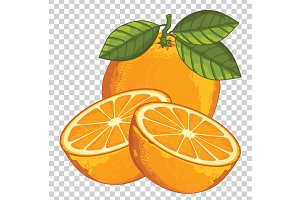 Orange Isolated, Vector.
