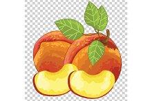 Peach Isolated, Vector.