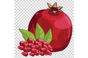 Pomegranate Isolated, Vector.