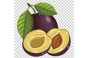 Plum Isolated, Vector.