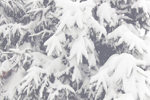 Snowy Trees 03