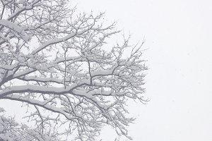Snowy Trees 05