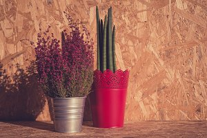 Pink heather and Sanseveria plants