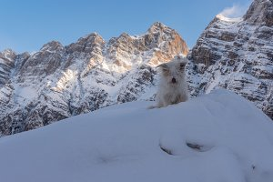 Dog posing in the winter mountains