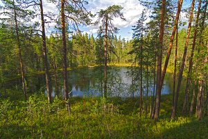 Small forest lake.