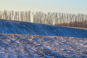 Winter on the field