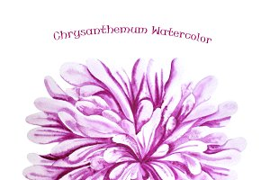 Watercolor Purple Chrysanthemum
