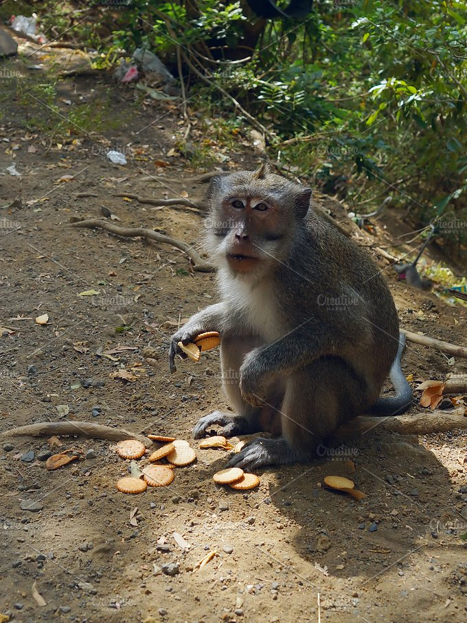 Monkey with cookies.jpg - Animals