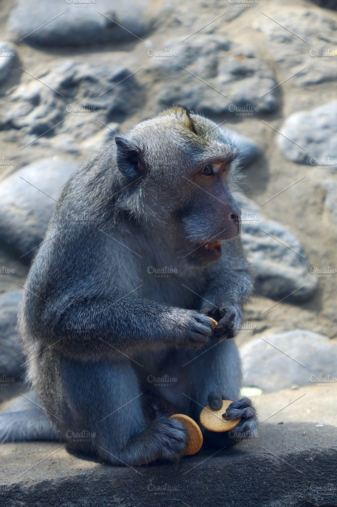 Monkey with cookies in Bali.jpg - Animals
