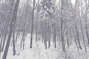 Snowy Trees 06