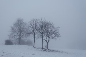 Snowy Field with Trees in Winter