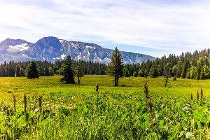 Alpin Nature