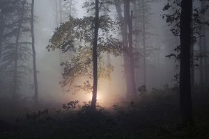 Magical light in mysterious forest