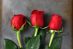 Three Red Rose Buds