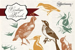 Vintage Birds Clipart & Photoshop