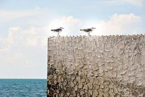 Summer Seagulls