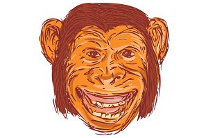 Chimpanzee Head Front  Isolated Draw