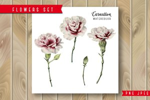 Set of isolated Carnations