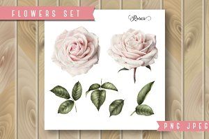 Set of isolated roses and leaves