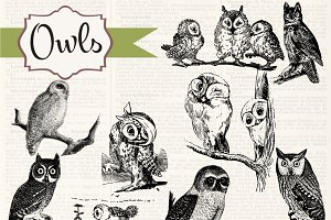 Vintage Owls Clipart & Brushes