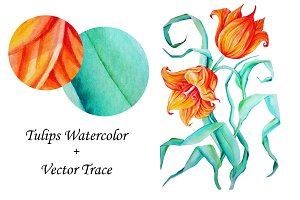 Tulips Watercolor Vector