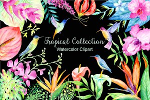 Watercolor Tropical Collection