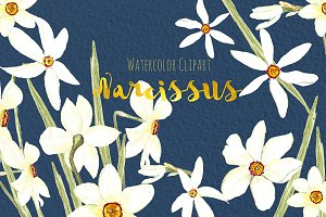 Narcissus. Watercolor clipart.