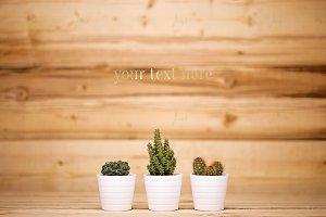 Styled Cacti - Wood Background ♥