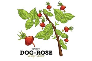 Dog-Rose Set, Vector.